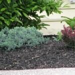 Black Colored Mulch (10)