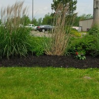 Black Colored Mulch (2)