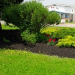 Black Colored Mulch (5)