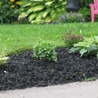 Black Colored Mulch (8)