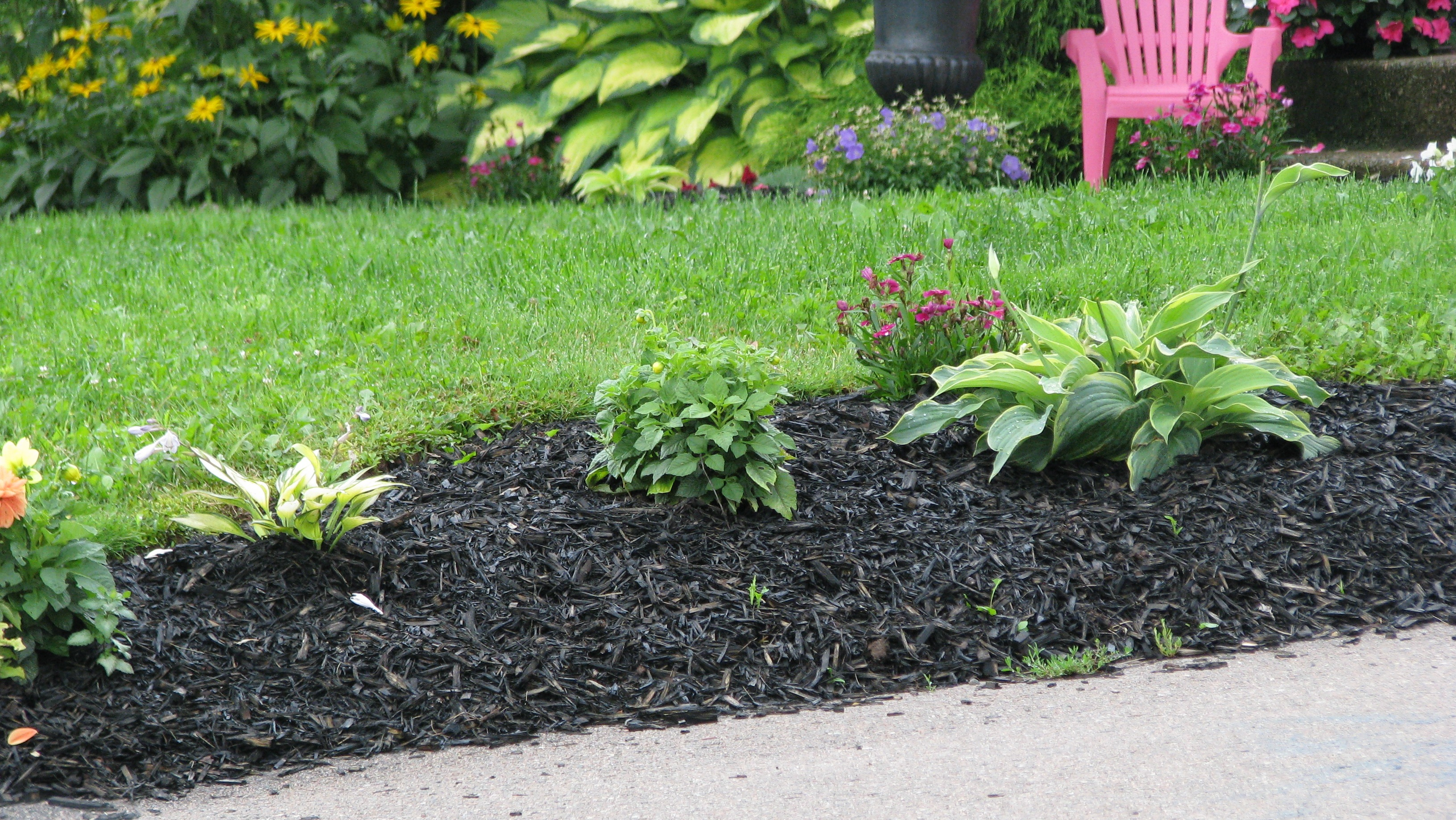 rinse a alternifolium with garden cardboard to img how mulch